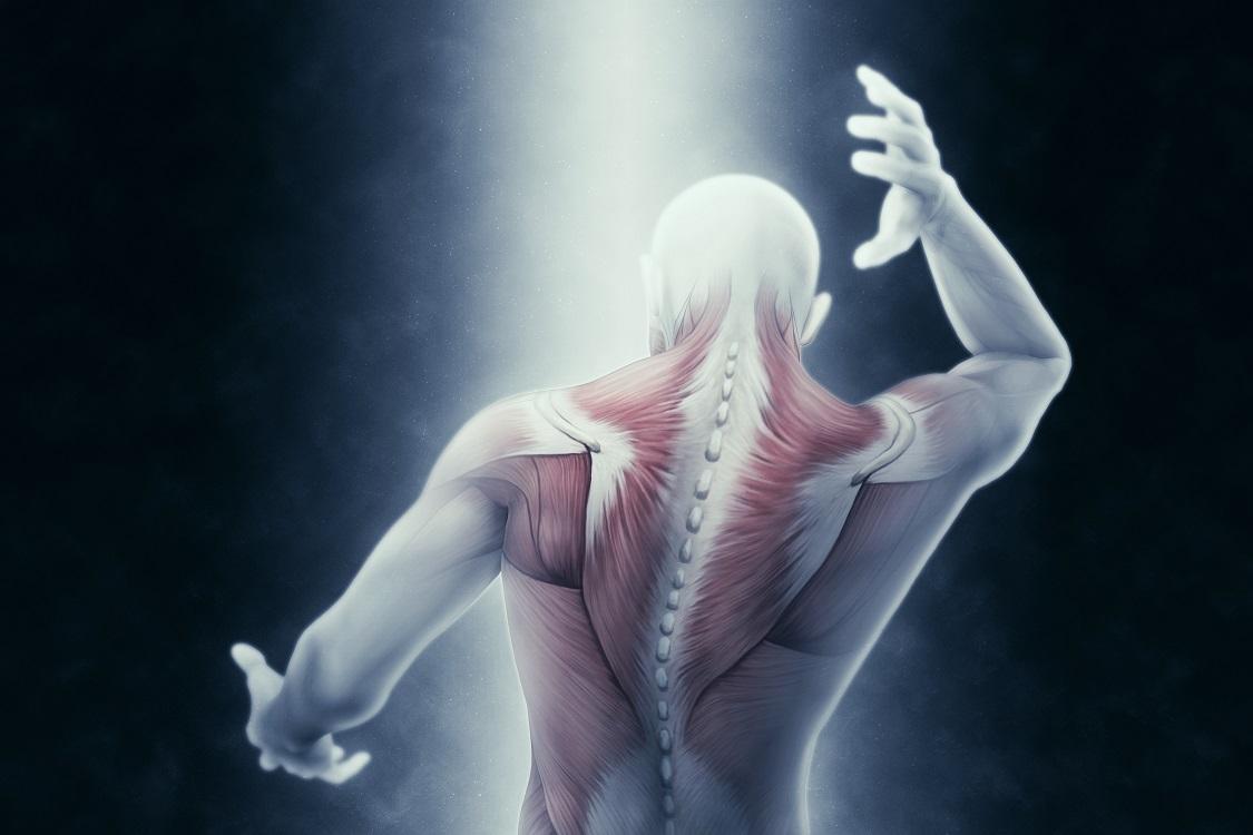 Ecografia muscolo scheletrica